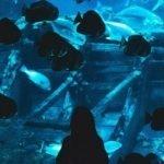 ozone aquaculture ozono aquacultura